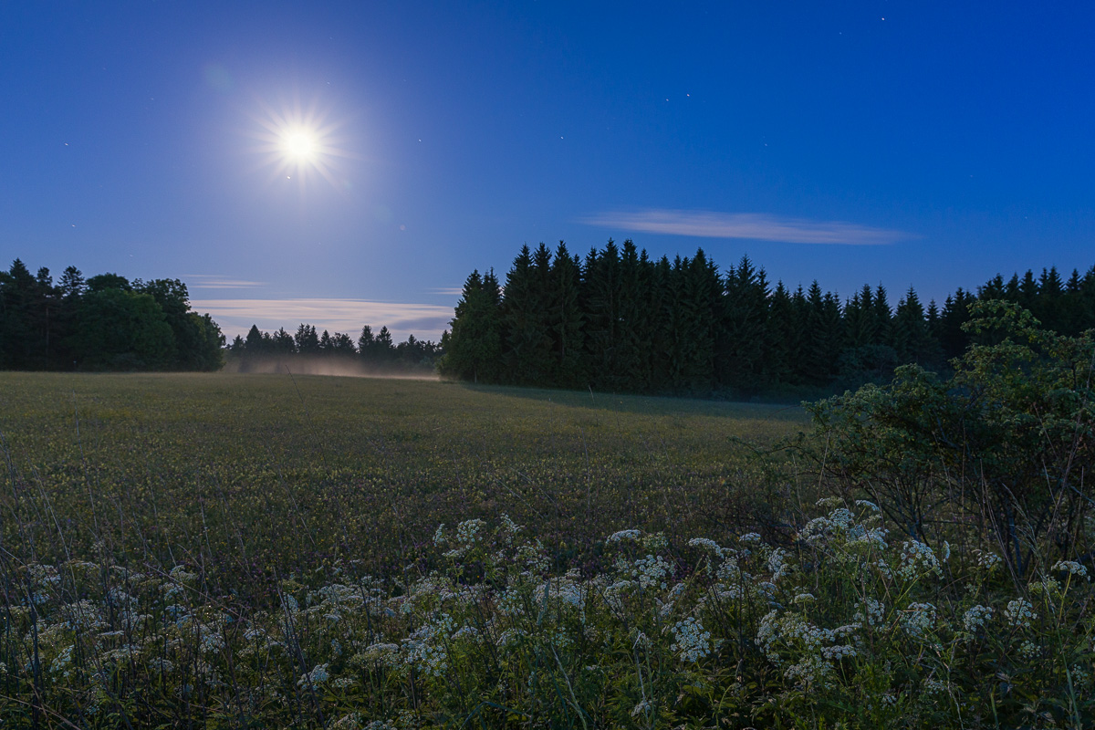 20170610_Wolfgang_Trust_M4_1804.jpg